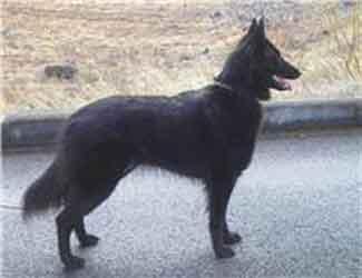 Kivu Photo